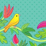 明亮的黄色,橙色矮小的热带森林鸟 库存照片