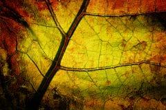 明亮的grunge叶子 免版税图库摄影
