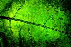 明亮的grunge叶子 免版税库存图片