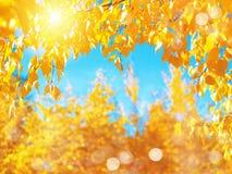 明亮秋天的背景 库存照片