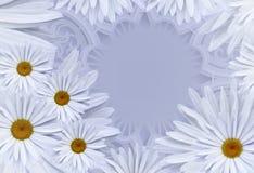 明信片为假日 与戴西的花卉文本的背景和地方 背景构成旋花植物空白花的郁金香 免版税库存图片
