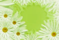明信片为假日 与戴西的花卉背景在绿色背景 安置文本 背景构成旋花植物空白花的郁金香 免版税库存图片