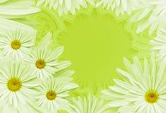 明信片为假日 与戴西的花卉背景在黄色背景 安置文本 背景构成旋花植物空白花的郁金香 免版税图库摄影