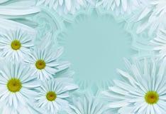 明信片为假日 与白绿松石雏菊的花卉文本的背景和地方 背景构成旋花植物空白花的郁金香 库存照片
