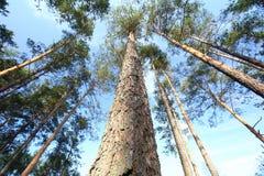 明信片结构树黄色 库存照片
