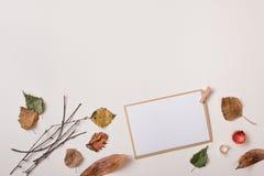 明信片/纸牌和秋天干燥植物 库存照片