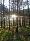 黎明在森林里 免版税库存照片