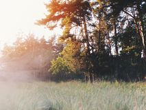 黎明在森林里 免版税库存图片