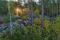 黎明在森林 免版税库存照片