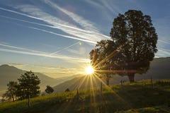 黎明在牧场地 免版税图库摄影