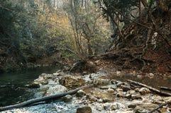 黎明在秋天森林里 免版税库存照片