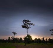 黎明域偏僻的结构树 库存照片