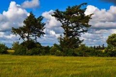 明媚的阳光和大白色云彩在丹麦 免版税库存图片