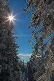 明媚的阳光在山森林里,冬天风景 免版税库存图片
