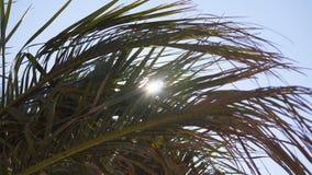 明媚的阳光通过棕榈树分支,sstormy风 影视素材