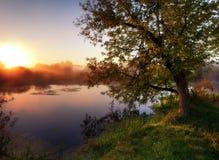 黎明捕鱼早晨河 库存照片