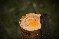 明显的木头 图库摄影