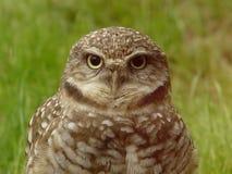 明智老的猫头鹰 免版税库存图片