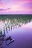 黎明的颜色在稻田的 免版税库存照片