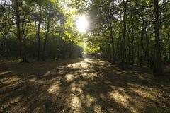 黎明通过树 库存照片