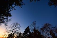 黎明,与树, NJ 免版税库存图片