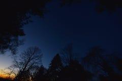 黎明,与树, NJ 库存图片
