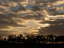 黄昏的佛罗里达沼泽地 库存照片