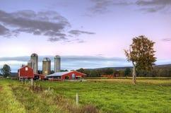 黄昏的谷仓与母牛和草在前景 免版税库存图片
