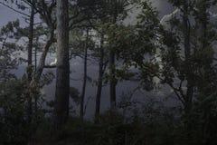 黄昏的黑暗的森林 免版税库存照片
