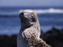 易上镜头的鸟 免版税库存照片