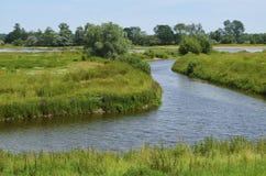 易北河的草甸 库存照片