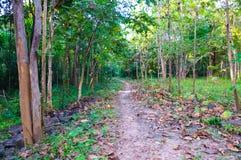 轻易完成的事情在森林里 图库摄影