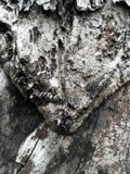 易碎的木头 图库摄影