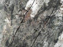 易碎的木头 免版税库存图片