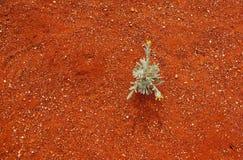 易碎的生活在一片苛刻的沙漠 免版税图库摄影