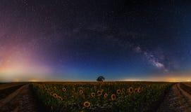 星和月亮在向日葵的领域 图库摄影