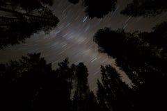 星在与银河星系和树silho的夜空落后 图库摄影