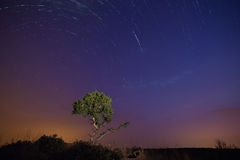 星在前景的足迹在晚上和树绘与光 库存图片