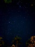 星在庭院里 免版税库存照片