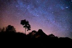 星在森林里 免版税库存图片