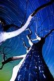 星形落后结构树 库存照片