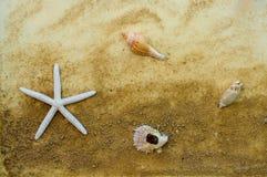 星形鱼和贝类 图库摄影