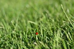 星期天新春天绿草背景 库存照片
