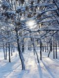 星期日冬天 库存图片