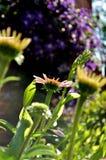 星期日往 美好的早晨在庭院里 库存图片