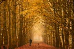 星期日早晨步行在秋天 免版税库存照片