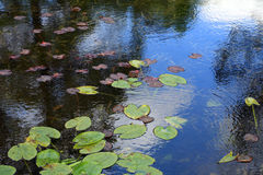 星莲属在日本庭院里 库存图片