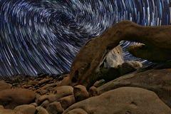 星足迹在曲拱的约书亚树国家公园 库存照片