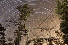 星足迹通过树-大沼泽地国家公园 库存照片