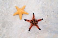 星鱼 免版税图库摄影